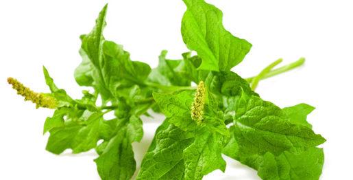 spinaci selvatici